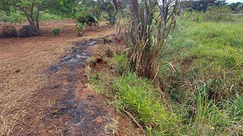 Assisense é multado em R$ 1.180,00 por dificultar regeneração de vegetação nativa