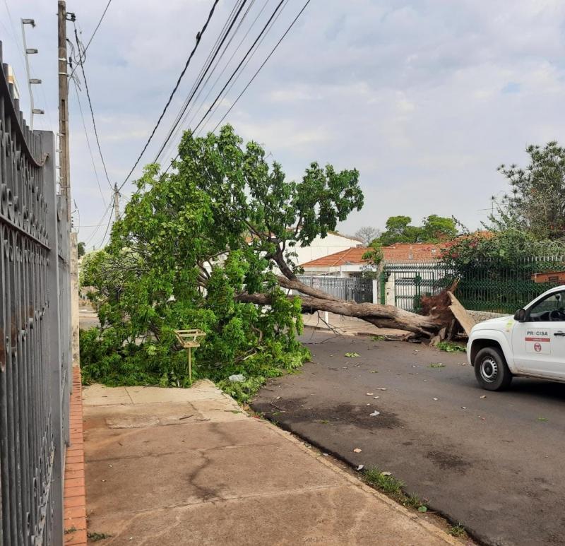 Após ventania e estragos, cresce alerta para 180 árvores com risco de queda