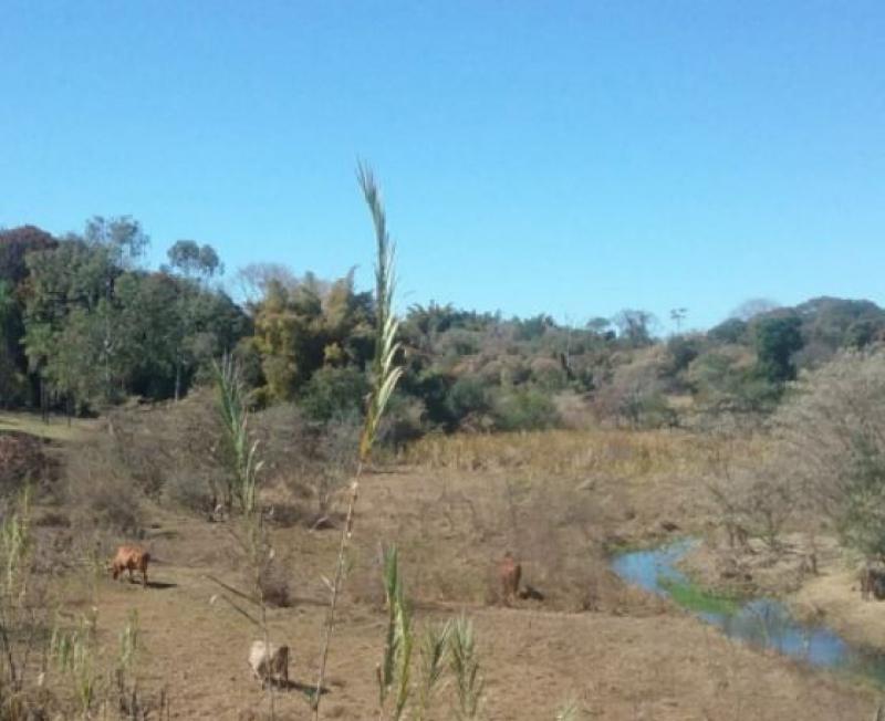 Município tem o dia mais frio em 21 anos e geada castiga vegetação