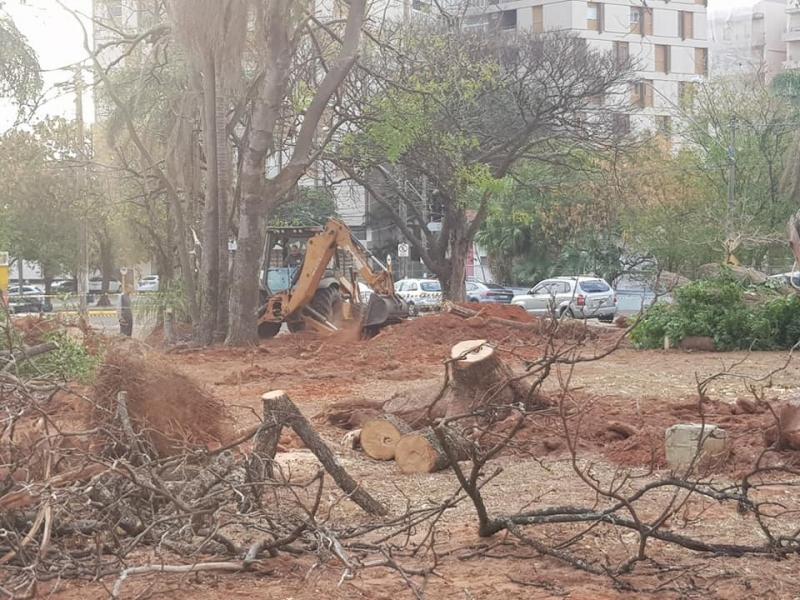 Corte de 44 árvores na Praça Portugal causa indignação em ambientalistas