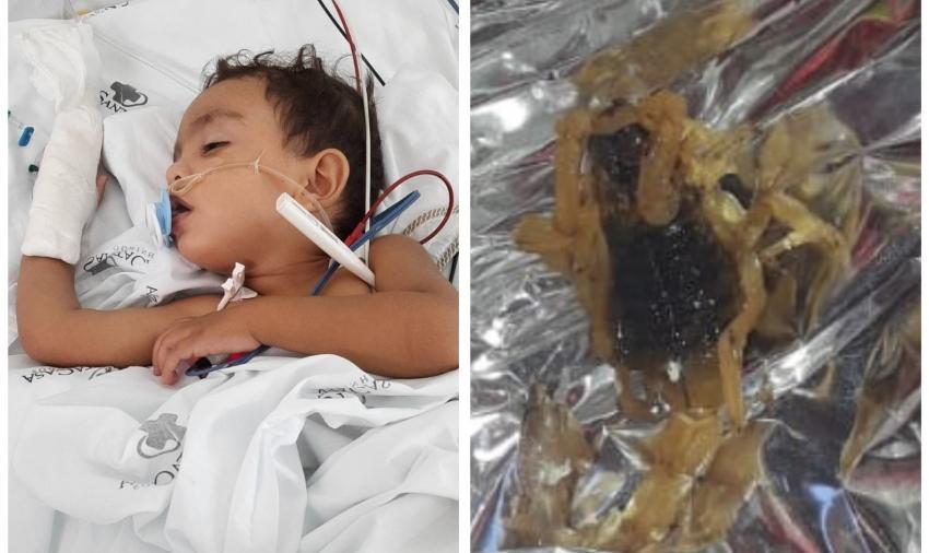 Munícipe de Ourinhos, que teve filho internado após ser picado por escorpião, já encontrou mais dez em casa