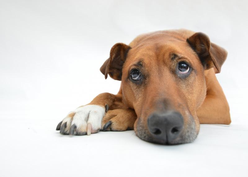 Feira de Adoção Pet ocorre hoje,  das 13h às 18h
